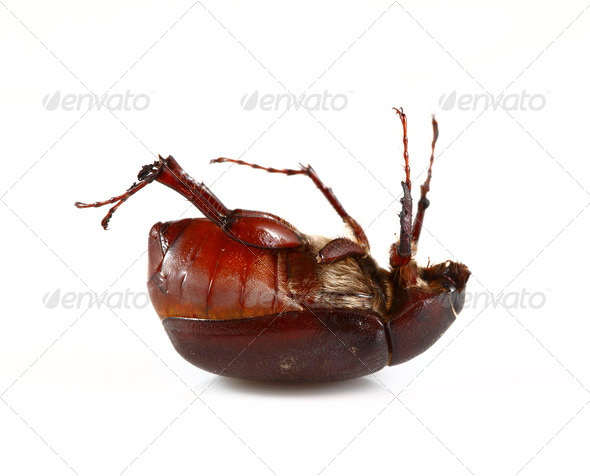 June Bug - Stock Photo - Images