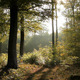In The Forest - VideoHive Item for Sale