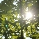 Leaf In The Sun - VideoHive Item for Sale