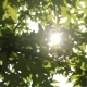 Leaf In The Sun 2 - VideoHive Item for Sale