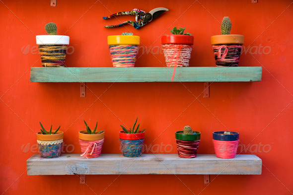 Shelf full of cacti - Stock Photo - Images