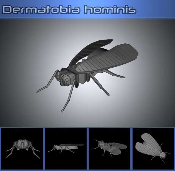 Dermatobia Hominis - 3DOcean Item for Sale