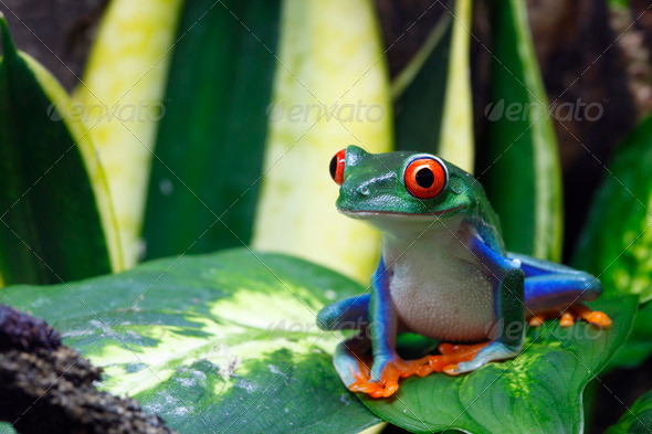 Smiling Frog - Stock Photo - Images