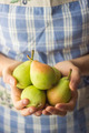 Organic Pears - PhotoDune Item for Sale