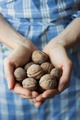 Organic walnuts  - PhotoDune Item for Sale