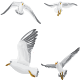 Seagull  - GraphicRiver Item for Sale
