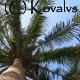 Palm Tree - VideoHive Item for Sale