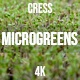Microgreens Cress 2 - VideoHive Item for Sale