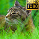Cat In The Grass 02 - VideoHive Item for Sale