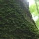 Tree Moss In The Woods - VideoHive Item for Sale