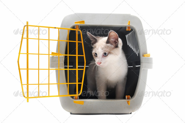 kitten in pet carrier - Stock Photo - Images