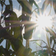 Corn1 - VideoHive Item for Sale