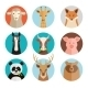 Animals Avatars - GraphicRiver Item for Sale