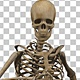 Running Human Skeleton (2-Pack) - VideoHive Item for Sale