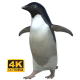 Penguin (Adélie) - Walking/Sliding - VideoHive Item for Sale