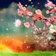 Cherry Blossom Petals Falling Down At Dusk (4K) - VideoHive Item for Sale