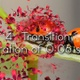 Petal Transition Pack  - VideoHive Item for Sale