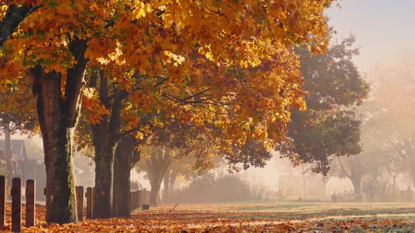 Fall Trees With Falling Leaves And Person Walking By Rockfordmedia