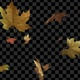 Autumn Leaves Falling - VideoHive Item for Sale