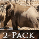Elephant Wild Africa - VideoHive Item for Sale