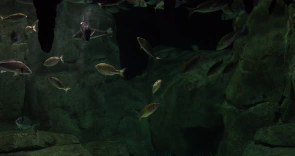 VideoHive Aquarium Fish 20402101