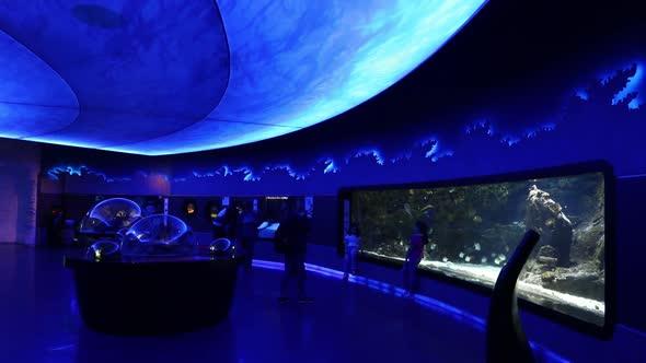 VideoHive Aquarium Travel 20402322