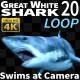 Shark 20 - VideoHive Item for Sale