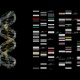 DNA and Genetic map - VideoHive Item for Sale