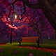 Cherry Blossom In Night Light  - VideoHive Item for Sale