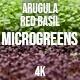 Microgreens Arugula Red Basil  - VideoHive Item for Sale