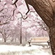 Snow-covered Trees And Benches - VideoHive Item for Sale