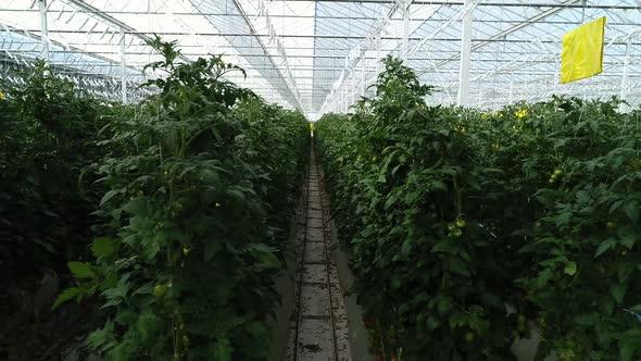VideoHive Greenhouse Interior 20318234