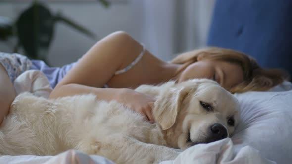 Resultado de imagen para golden retriever sleeping with owner