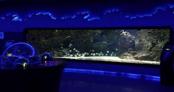 VideoHive Aquarium 5 20402323