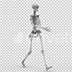 Skeleton Walk Cycle - VideoHive Item for Sale