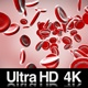 4K Stream Of Red Blood Cells In Front - VideoHive Item for Sale