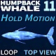 Humpback Whale 11 - VideoHive Item for Sale