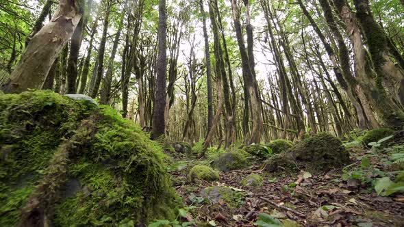 fb63d11f4 Mossy Forest Floor by Pro-Stock | VideoHive