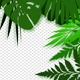 Exotic Plants Frame - VideoHive Item for Sale
