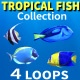 Tropical Fish Collection - VideoHive Item for Sale