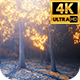 Glow Light Forest 4k - VideoHive Item for Sale