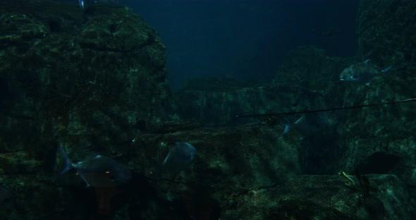 VideoHive Aquarium Fishes 20401966
