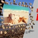 Sea Pebbles And Shells - Pack Of 4 - VideoHive Item for Sale