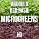 Microgreens Arugula Red Basil - VideoHive Item for Sale
