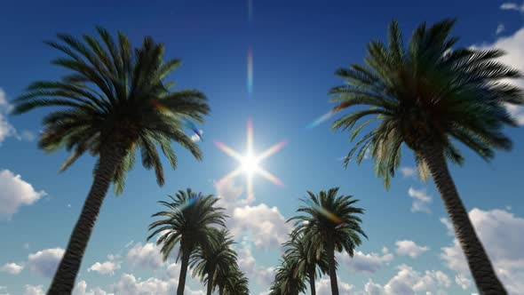 Palm Trees In The Sunshine by vokri | VideoHive