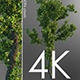Free Download 4k Tree Grow Time Lapse Nulled