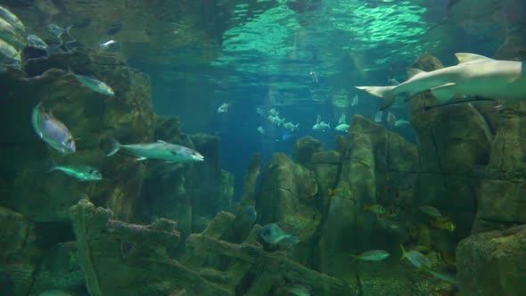 VideoHive Fishery 20402324