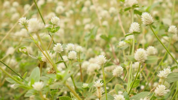 White grass flower by por888 videohive play preview video mightylinksfo