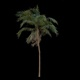 Palm Tree in Storm - VideoHive Item for Sale