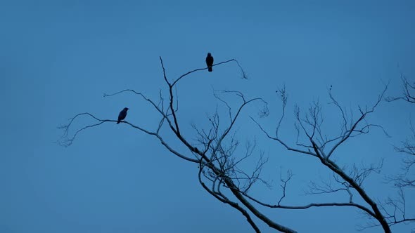 Birds Fly Off Branches